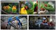 parrot secrets