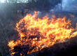 Fire Is Good for Prairie: Mark Leach Discusses His Research at the...