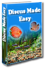 discus made easy review