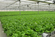 American Hydroponics Celebrates 30 Years of Growing and Innovation