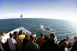 Experience San Diego's Extraordinary Blue Whale Migration Up Close...