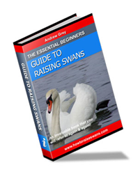 the essential beginners guide to raising swan review