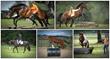 horse training success