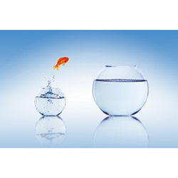An Image of a Goldfish Jumping from One Bowl to Another