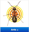 What's Bugging You? Ants!
