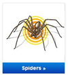 TERRO Spider Killer Sprays and Spider Traps provide a one-two punch to keep your home free of spiders, including brown recluse, black widow and hobo spiders.