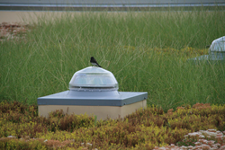 GreenRoofsRestoreHabitat