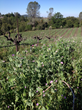 Earth Friendly Practices Help Define El Dorado Wine Region