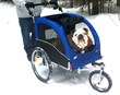 Bull Dog in Booyah Stroller