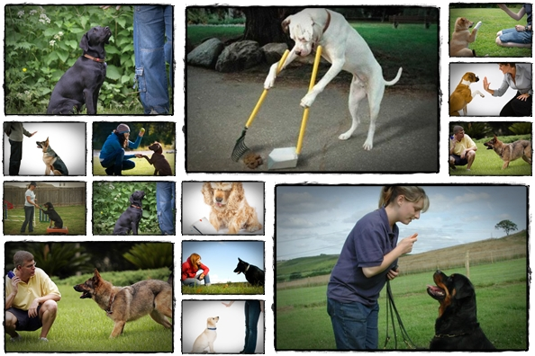 koehler method of dog training pdf