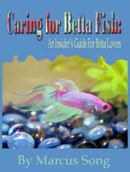 caring for betta fish review