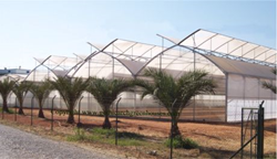Production Greenhouses - Gothic Arch Greenhouses