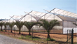 Maintaining Optimum Climate Control in the Greenhouse for Plant Success - Gothic Arch Greenhouses