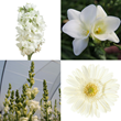 wedding flowers, wholesale flowers, bulk flowers, wholesale wedding flowers