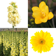 wedding flowers, wholesale flowers, bulk flowers, yellow wedding flowers