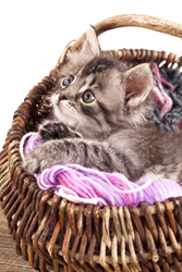 A kitten in a basket of yarn. Cats eating string is a common pet insurance claim processed by Pets Best.