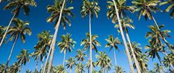kauai, kauai accommodations, kauai affordable accommodations, kauai hotels, kauai lodging, kauai east side