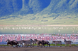 Ngorongoro Crater is the largest unbroken caldera in the world.