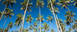 What's New On Kauai's Royal Coconut Coast
