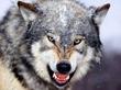 Wolf @ EurekaMag.com