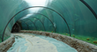 Inside the Freshwater exhibit is a curved tunnel that is 87 feet long and gives 180 degree views.