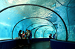 RPT acrylic is used to separate two penguin tanks inside the same tunnel giving visitors unimpeded views to both exhibits.