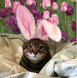 PetFirst Cautions Pet Parents of Pet Hazards During Easter...
