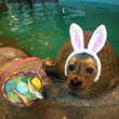 Sweet Rewards with Weekend Easter Egg Hunt at Maritime Aquarium