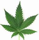 Summit explores regulatory and enforcement of legalized marijuana.