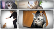 cat behavior secrets revealed