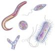 Parasites @ EurekaMag.com