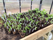BC Greenhouse Builders Kicks Off the Spring Season with...