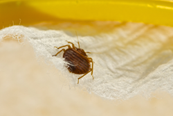 Senske Services, Pest Control, Bed Bugs, Inspection, Prevention, National Bed Bug Awareness Week