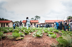 The new trainers stand in their patches of cabbage, hot peppers, soybeans, and chives and explain the organic principles of Food for Life to a crowd of government officials and journalists.