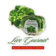 Live Gourmet® brand butter lettuce, upland cress, and 3-n-1 lettuce
