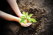 Clearview Energy, Inc. is Working With the Arbor Day Foundation to Plant Trees in Our Nation's Forests