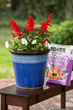 Create containers that will bloom all season long