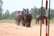 The Elephant Story Hosts First Elephant Polo Exhibition in Moo Baan...