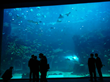 This R-Cast® panel in the Deep Blue Ocean exhibit is 35' long and 20' tall, giving visitors stunning views to thousands of animals.