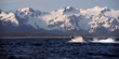 Copper River Fishermen Bring the First of Alaska's Wild Salmon to...