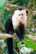 Manuel Antonio National Park Expands Operating Hours