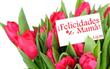 <http://www.californiaflowermall.com/flowers/in-season/item/133-la-flower-district-california-flower-mall-grammy-poll-picks-latin-artists-top-flowers>