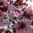A Fresh New Sales Direction at T-Y Nursery in Torrance, California