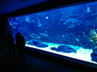 Visitors enjoy the shark tank during the opening ceremony at aqua planet Ilsan.