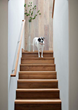 Even with heavy foot (and paw) traffic, Smooth Reclaimed Teak is a durable choice for NEWwoodworks crafted stairs.