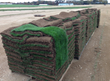 pallets of sod grass