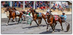 Wine Festivals Harness Racing | Go Blue Ridge Travel