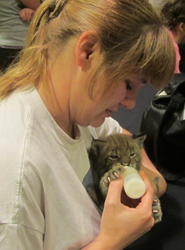 Lynx cub is bottle fed.