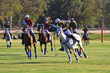 Temecula Valley Polo Club opening day, May 16, 2014