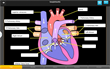 Interactive Heart